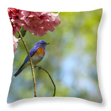Bluebird In Cherry Tree Throw Pillow
