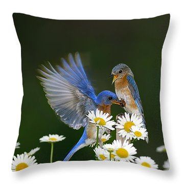 Throw Pillow featuring the photograph Bluebirds Picnicking In The Daisies by Randall Branham
