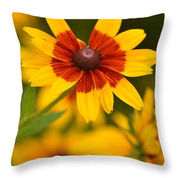 Throw Pillow featuring the photograph Blush-eyed Susan by JD Grimes