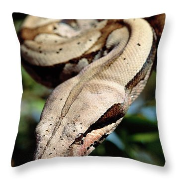 Boa Constrictor Boa Constrictor Throw Pillow by Claus Meyer