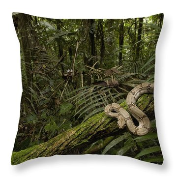 Boa Constrictor Boa Constrictor Coiled Throw Pillow by Pete Oxford
