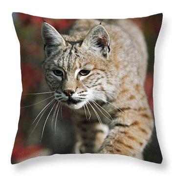 Bobcat Felis Rufus Throw Pillow by David Ponton