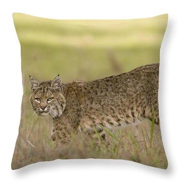 Bobcat Female Walking Santa Cruz Throw Pillow by Sebastian Kennerknecht