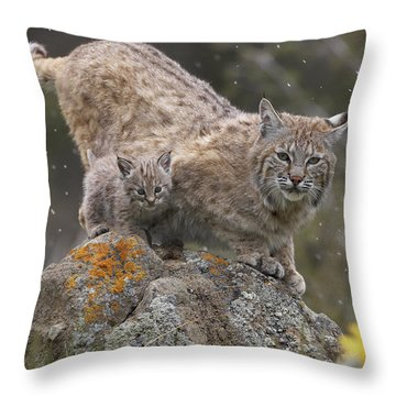 Bobcat Mother And Kitten In Snowfall Throw Pillow by Tim Fitzharris
