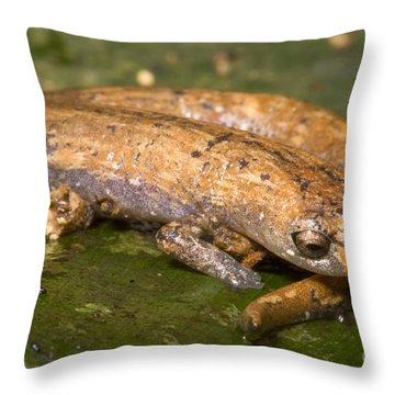 Bolitoglossine Salamander Throw Pillow by Dante Fenolio