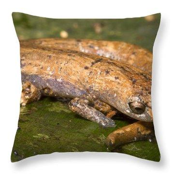 Bolitoglossine Salamander Throw Pillow by Dante Fenolio