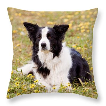 Border Collie In Field Of Yellow Flowers Throw Pillow