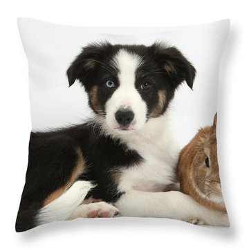 Border Collie Pup And Netherland-cross Throw Pillow by Mark Taylor