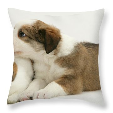Border Collie Pup With Dutch Rabbit Throw Pillow by Jane Burton
