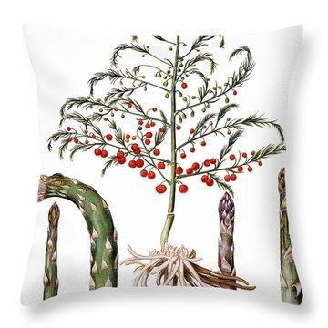 Botany: Asparagus, 1613 Throw Pillow
