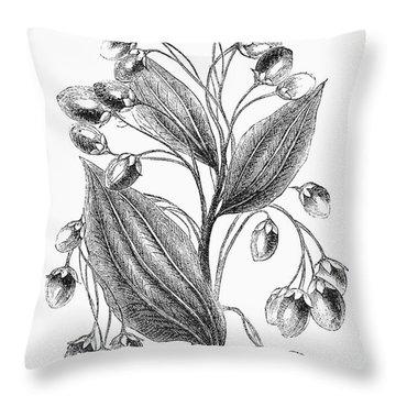 Botany: Cinnamon Plant Throw Pillow by Granger