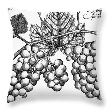 Botany: Grapes Throw Pillow by Granger