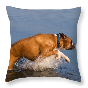 Boxer Playing In Water Throw Pillow by Stephanie McDowell