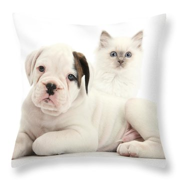 Boxer Puppy And Blue-point Kitten Throw Pillow by Mark Taylor