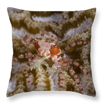 Boxing Crab In Raja Ampat, Indonesia Throw Pillow by Todd Winner