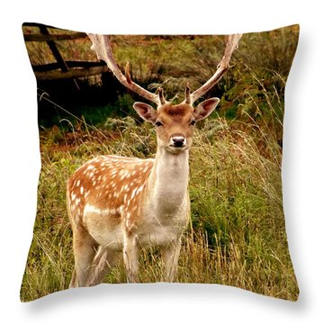 Wildlife Fallow Deer Stag Throw Pillow by Linsey Williams