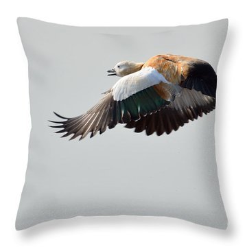 Brahminy Shelduck Throw Pillow by Fotosas Photography