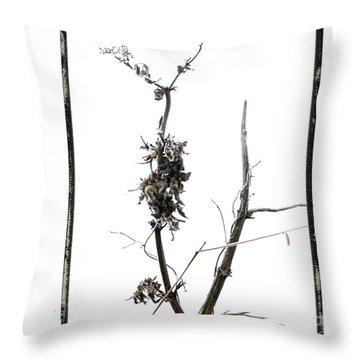 Branch Of Dried Out Flowers. Throw Pillow by Bernard Jaubert
