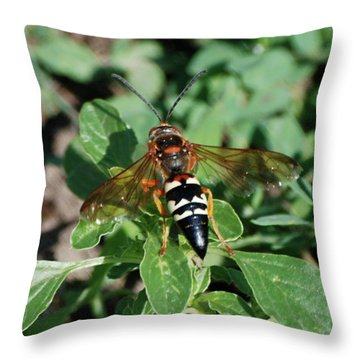 Throw Pillow featuring the photograph Break Time by Thomas Woolworth