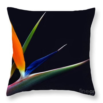 Bright Bird Of Paradise Square Frame Throw Pillow