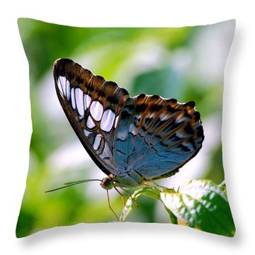 Throw Pillow featuring the photograph Bright Blue Butterfly by Peggy Franz