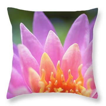 Bright Pink Water Lily Throw Pillow by Kicka Witte