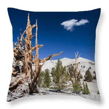 Bristlecone Pine - Pinus Longaeva Throw Pillow