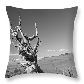 Bristlecone Pine And Cloud Throw Pillow
