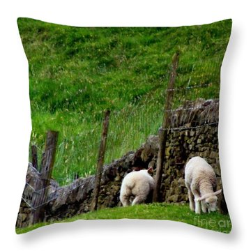 British Lamb Throw Pillow by Isabella F Abbie Shores FRSA