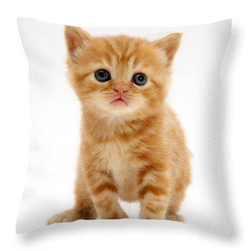 British Shorthair Red Tabby Kitten Throw Pillow by Jane Burton