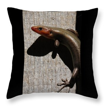 Broad-headed Skink On Barn  Throw Pillow by Daniel Reed