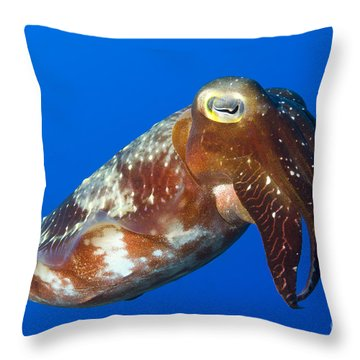 Broadclub Cuttlefish, Papua New Guinea Throw Pillow by Steve Jones