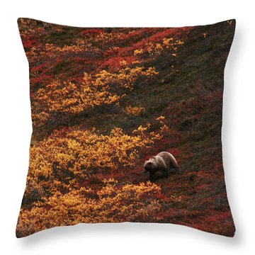 Brown Bear Denali National Park Throw Pillow