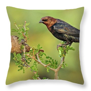 Brown Headed Cowbird Pair Throw Pillow