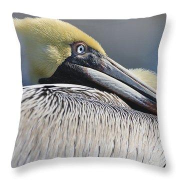 Brown Pelican Throw Pillow by Adam Romanowicz
