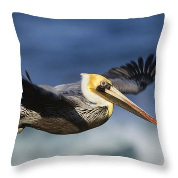 Brown Pelican Flying North America Throw Pillow