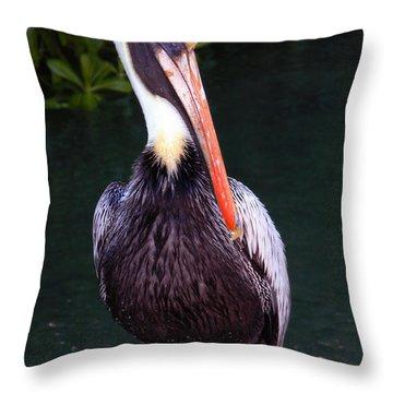 Throw Pillow featuring the photograph Brown Pelican Islamorada by Maureen E Ritter