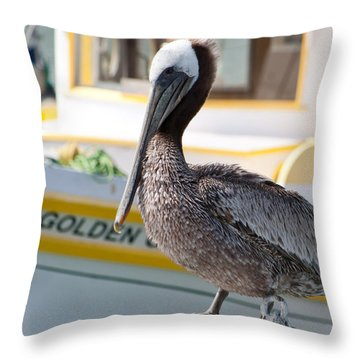 Brown Pelican Throw Pillow by Randy Bayne
