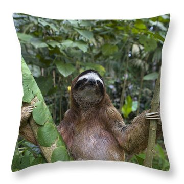 Brown Throated Three Toed Sloth Male Throw Pillow by Suzi Eszterhas