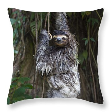 Brown Throated Three Toed Sloth Mother Throw Pillow by Suzi Eszterhas