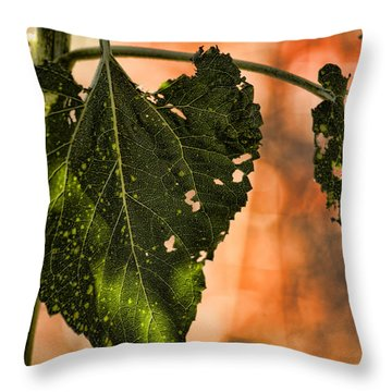 Buggilicious Throw Pillow by Bonnie Bruno