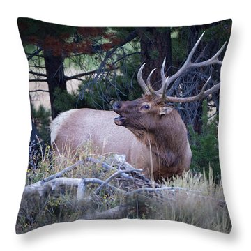 Bugling Bull Elk Throw Pillow by Ronald Lutz