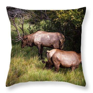 Bull Elk 7x7 Throw Pillow by Ronald Lutz