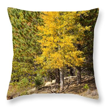 Bull Elk Watching Over Herd 3 Throw Pillow by James BO  Insogna