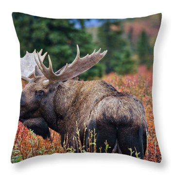 Bull Moose In The Fall Colors Throw Pillow by Thomas Payer