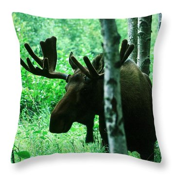 Bull Moose  Throw Pillow by Ronnie Glover