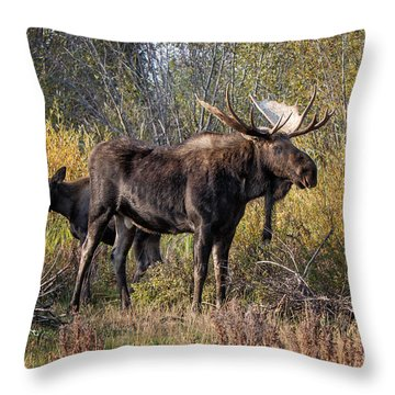 Bull Tolerates Calf Throw Pillow by Ronald Lutz