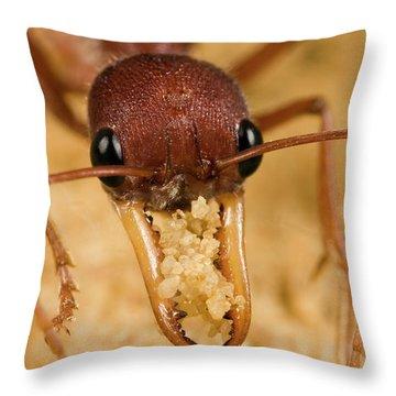 Bulldog Ant Myrmecia Gulosa Worker Throw Pillow by Mark Moffett