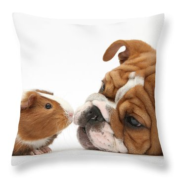 Bulldog Pup Face-to-face With Guinea Pig Throw Pillow by Mark Taylor