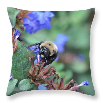 Bumblebee In Plumbago Larpentae Throw Pillow